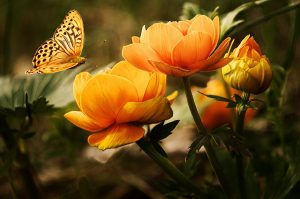 farfalla-cambiamento aquilibria